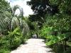 Одна из дорожек ботанического сада.