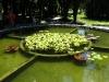Водные растения.