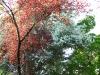 Красно-бело-зеленые деревья.
