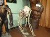 скелет орангутанга